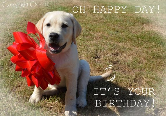 YELLOW LABRADOR PUPPY With Happy Birthday By Overthefenceart