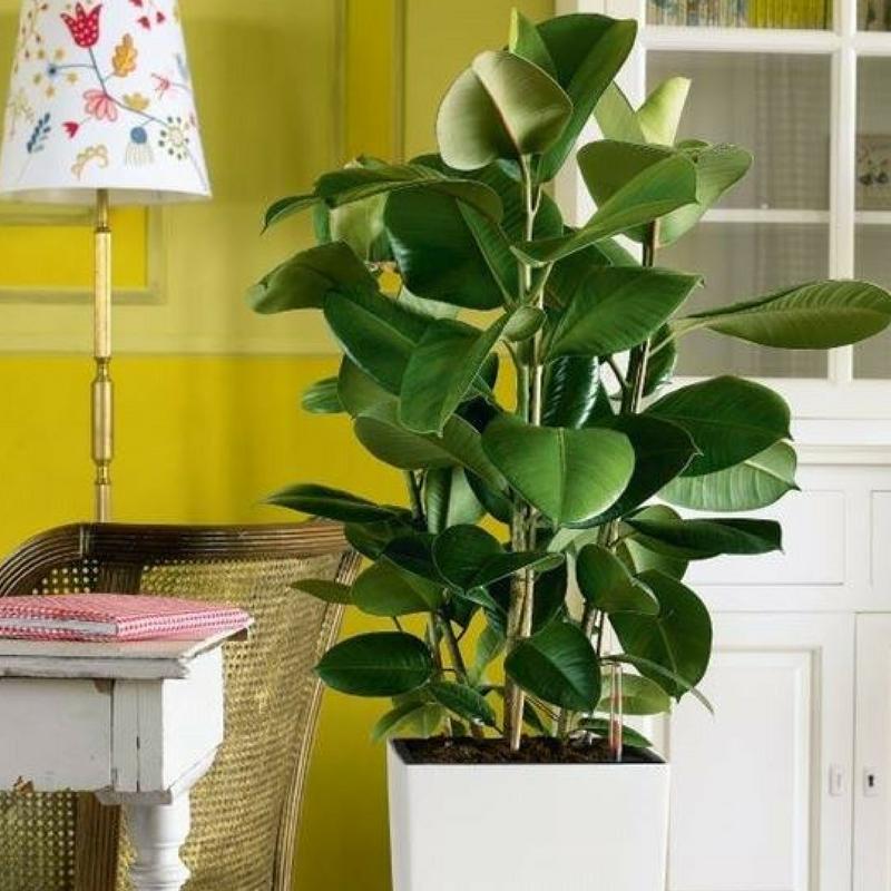 Come depurare l'aria con le piante da appartamento ...