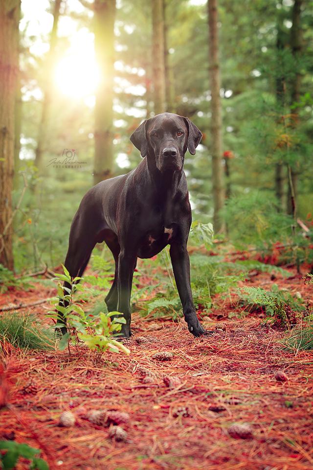 Pin Von R V R Auf Fotografie Hunde Hunde Hunde Mischlinge Hunde Fotos