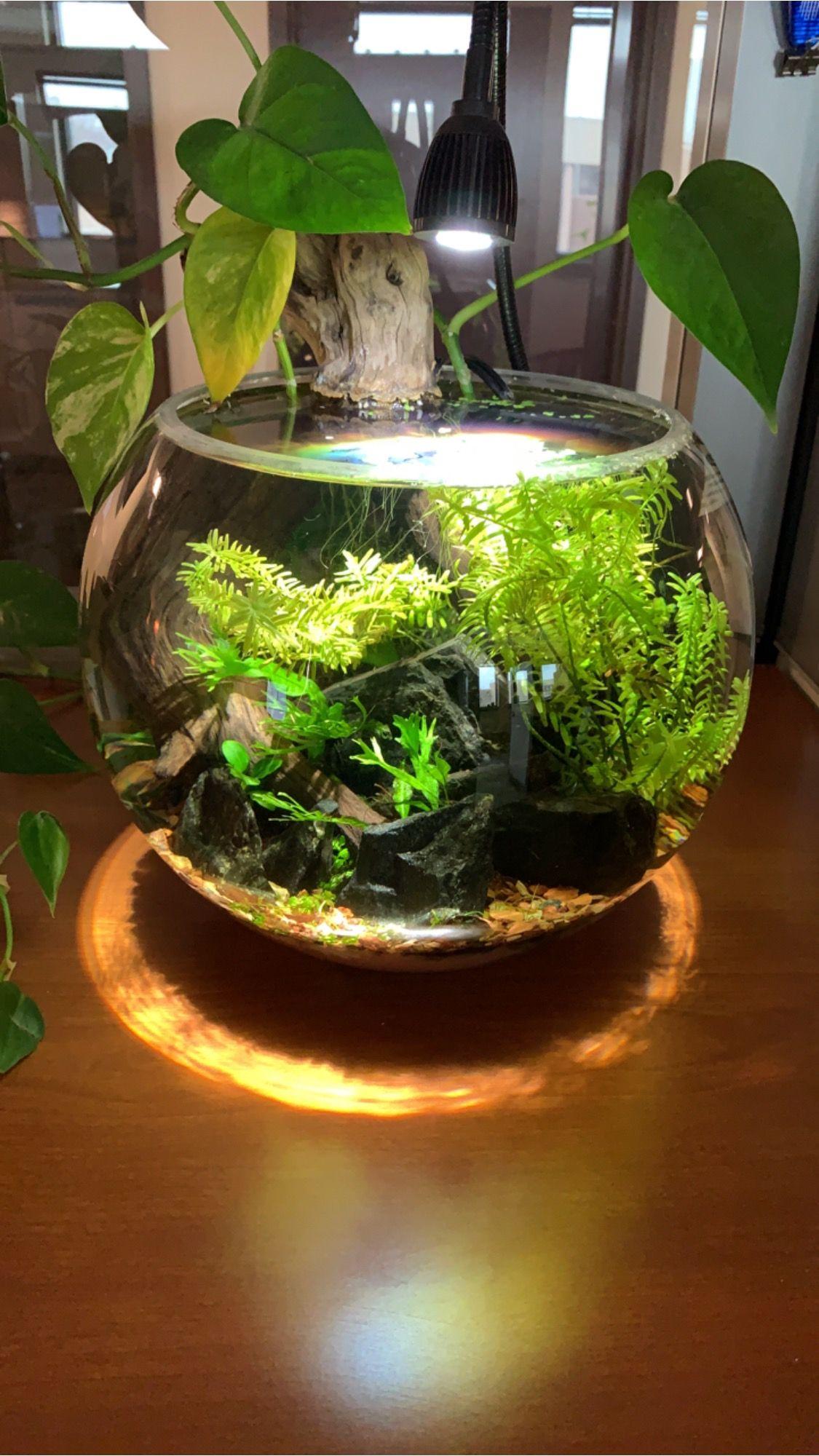 Bowl update: 4319   Indoor water garden, Water plants