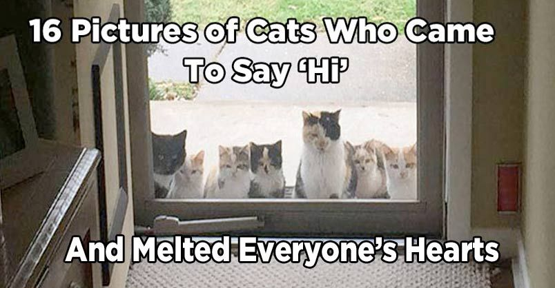 16 Pictures Of Cats Who Came To Say Hi And Melted Everyone S Hearts With Images Cats And Kittens Cat Pics Kitten Pictures