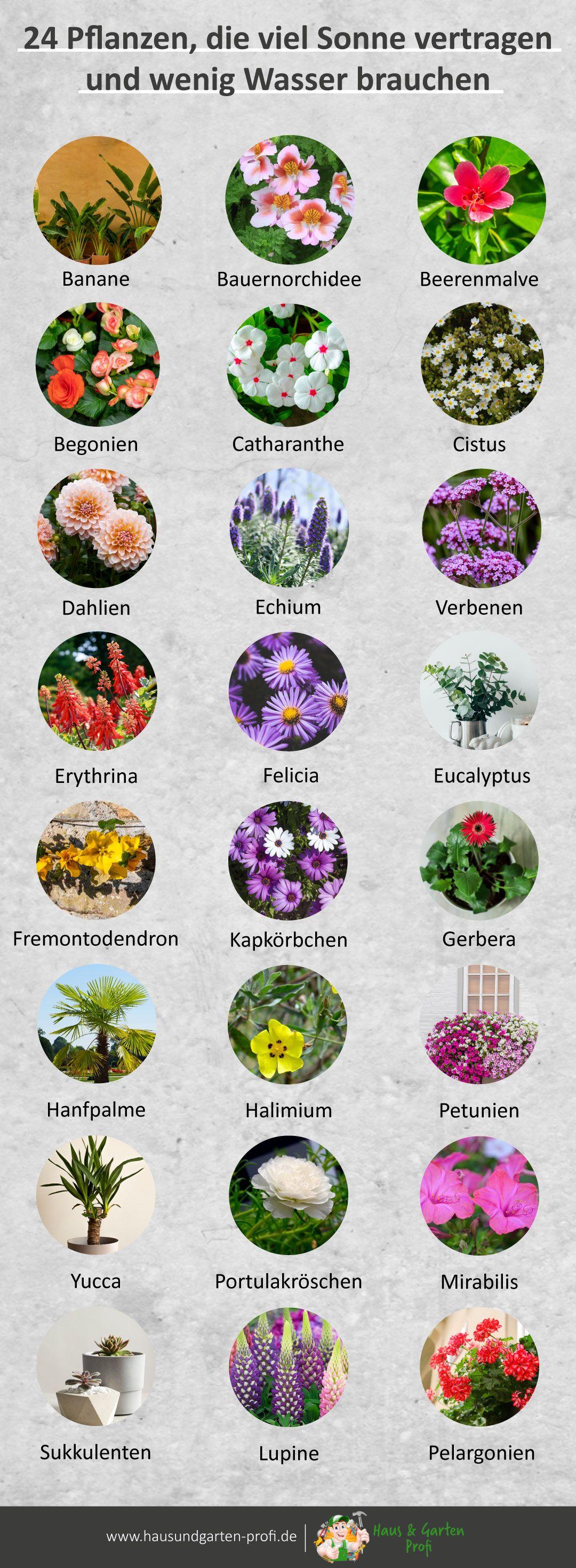 24 Pflanzen, die viel Sonne vertragen und wenig Wasser brauchen