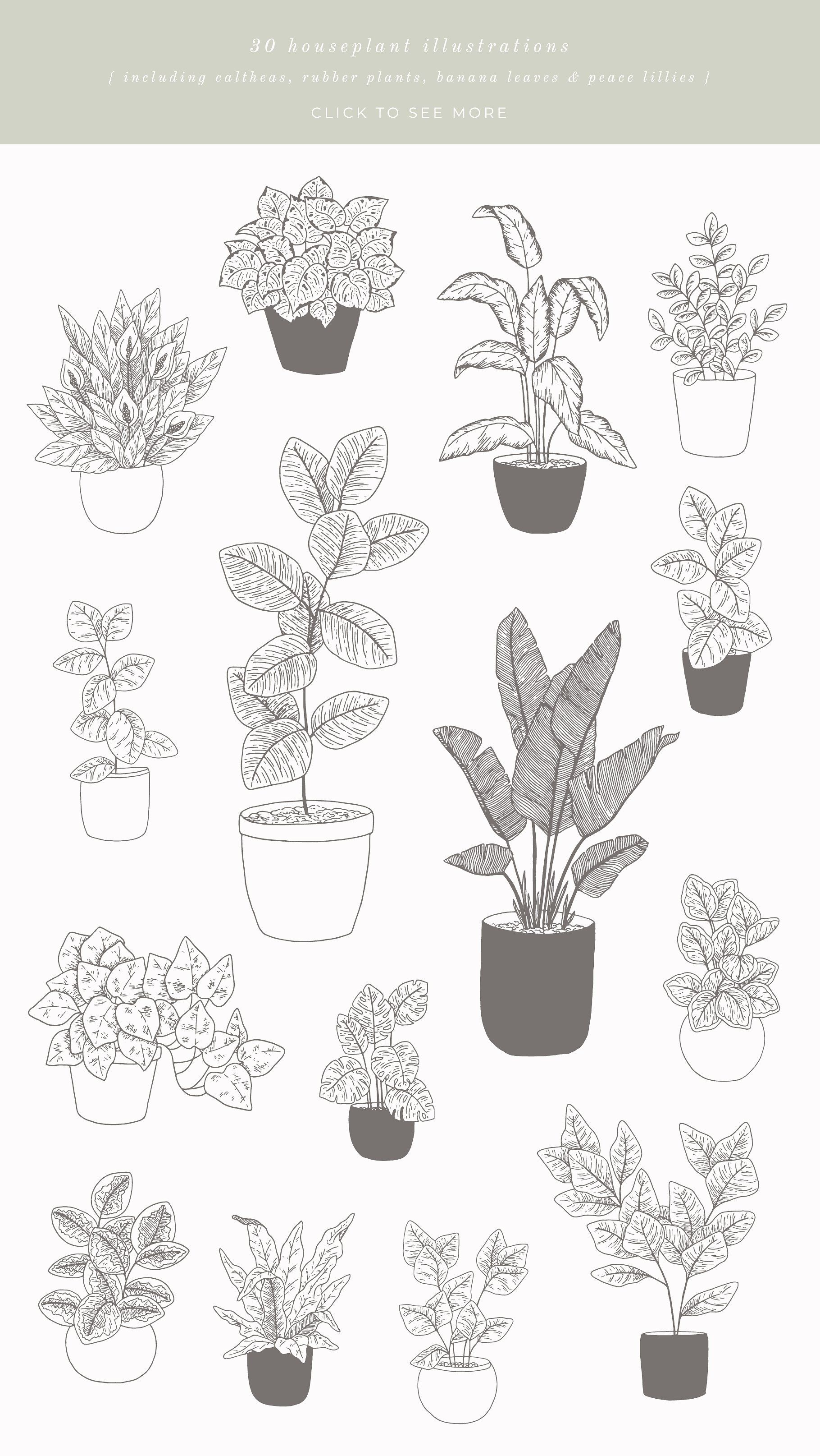 House Plants Vector Illustrations Plant Vector Plant Sketches