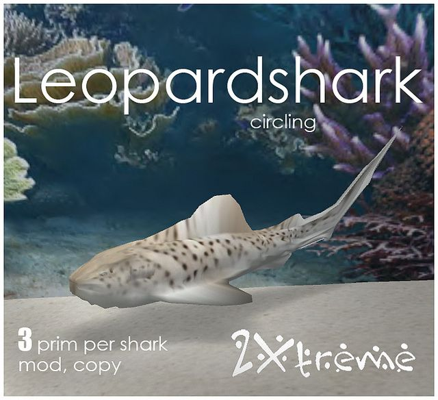 leopard shark by :: 2Xtreme ::