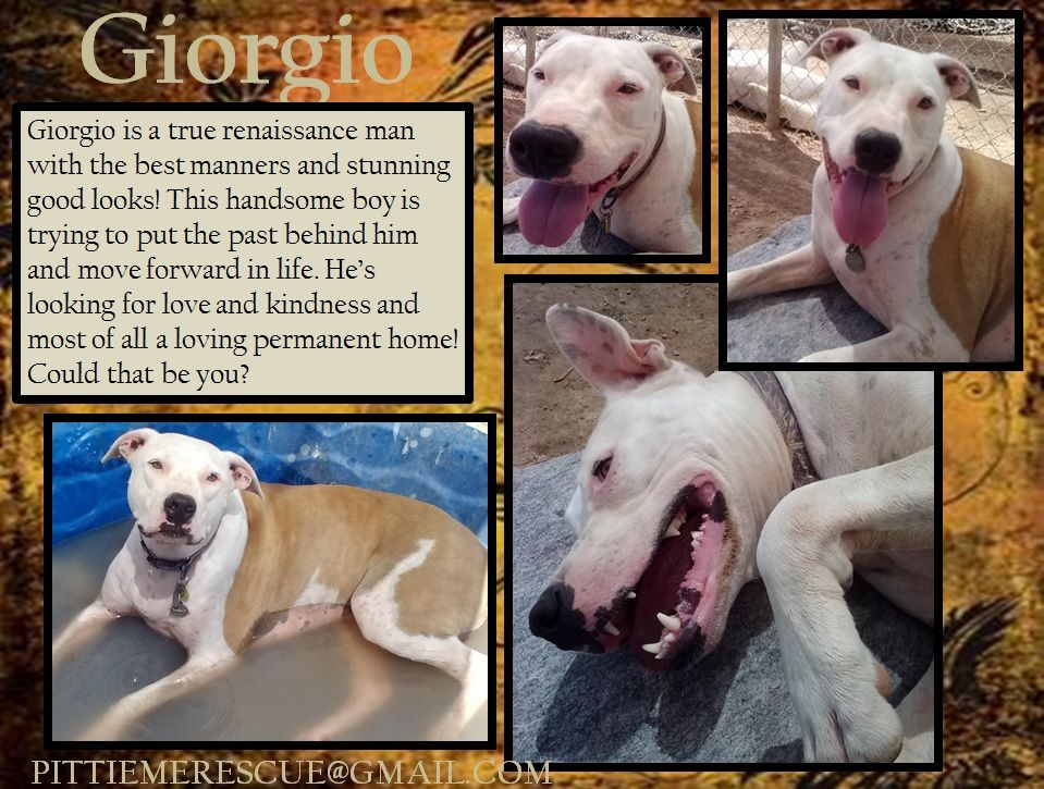 Http Pittiemerescue Org Adoptable Dogs Html Dog Adoption Dogs
