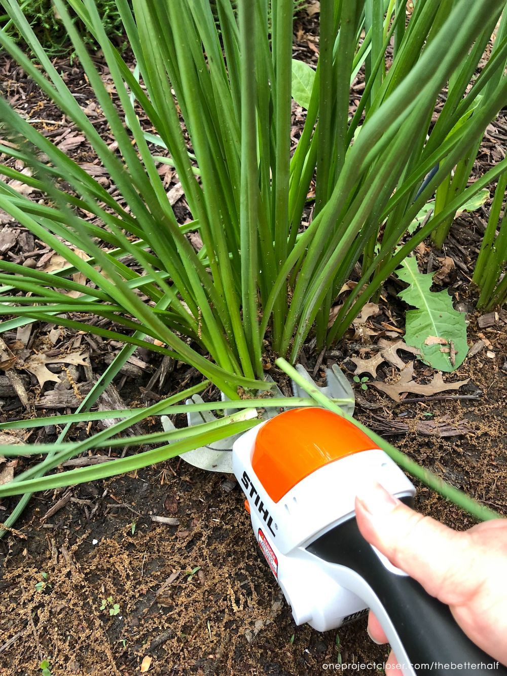 5 Simple Landscaping Ideas for Beginners   Easy ...