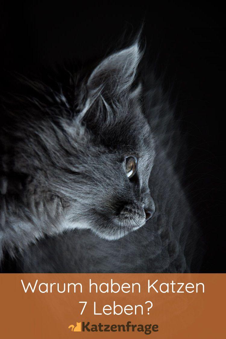 Warum Haben Katzen 7 Leben