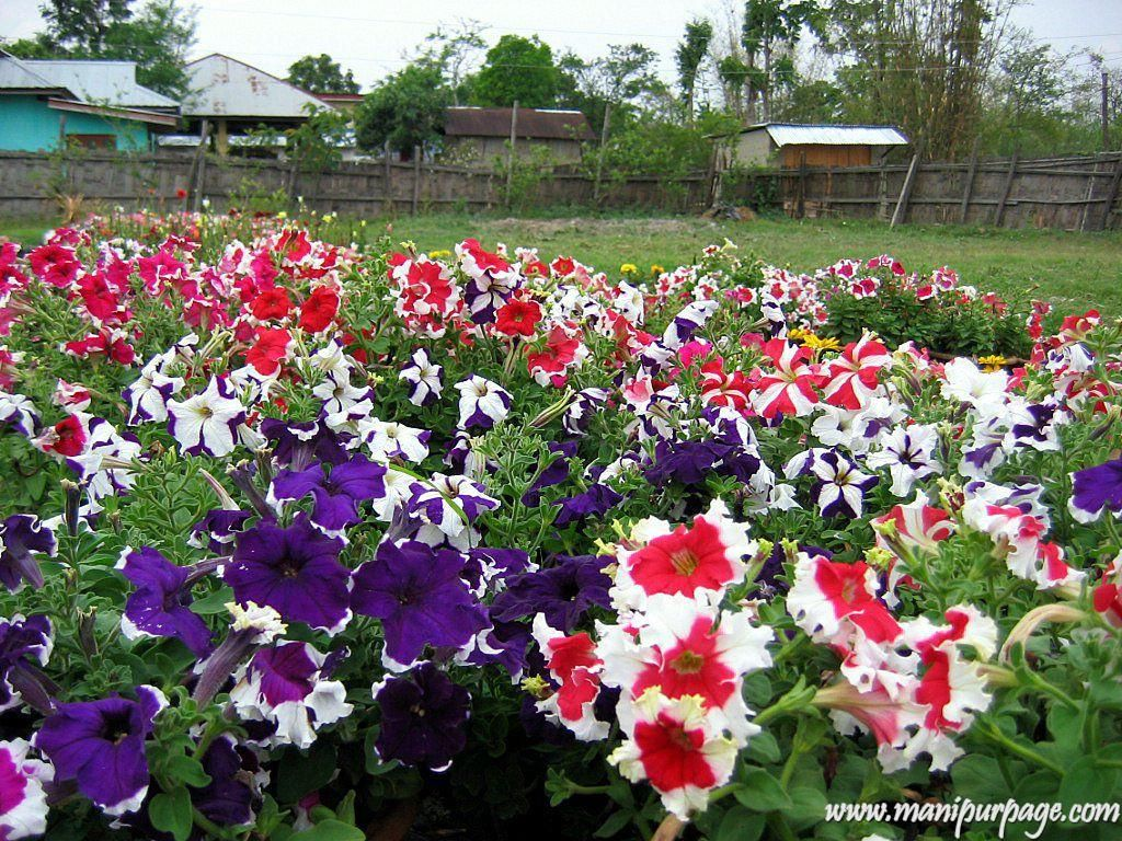 Beautiful Pictures Of Flower Scenery Beautiful Flowers