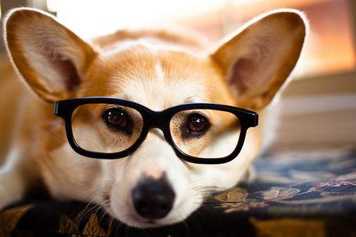 Geeky Taffy (by trustypics)