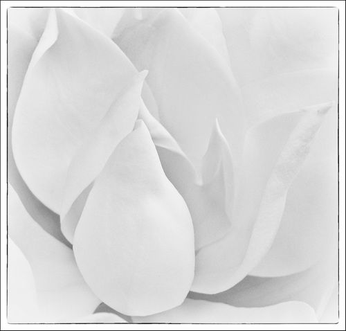 White Lights of Summer by Diane Thies