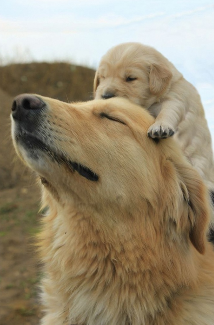 18 dogs and their miniature version … Just adorable!