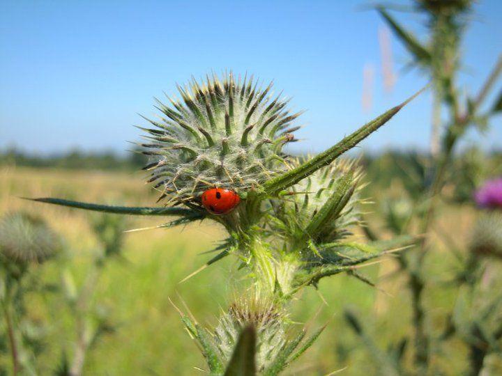 Lady Bug (Photo by Aryan Baines)