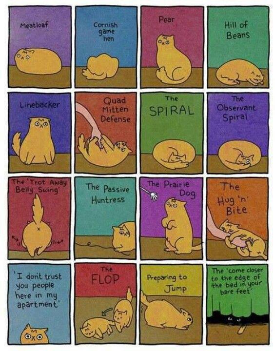 Cat positions hehe | Crazy cats, Cat body, Cat position