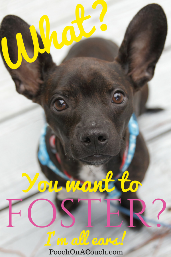 How To Foster Dogs   Foster dog, Foster dog mom, Rescue dogs