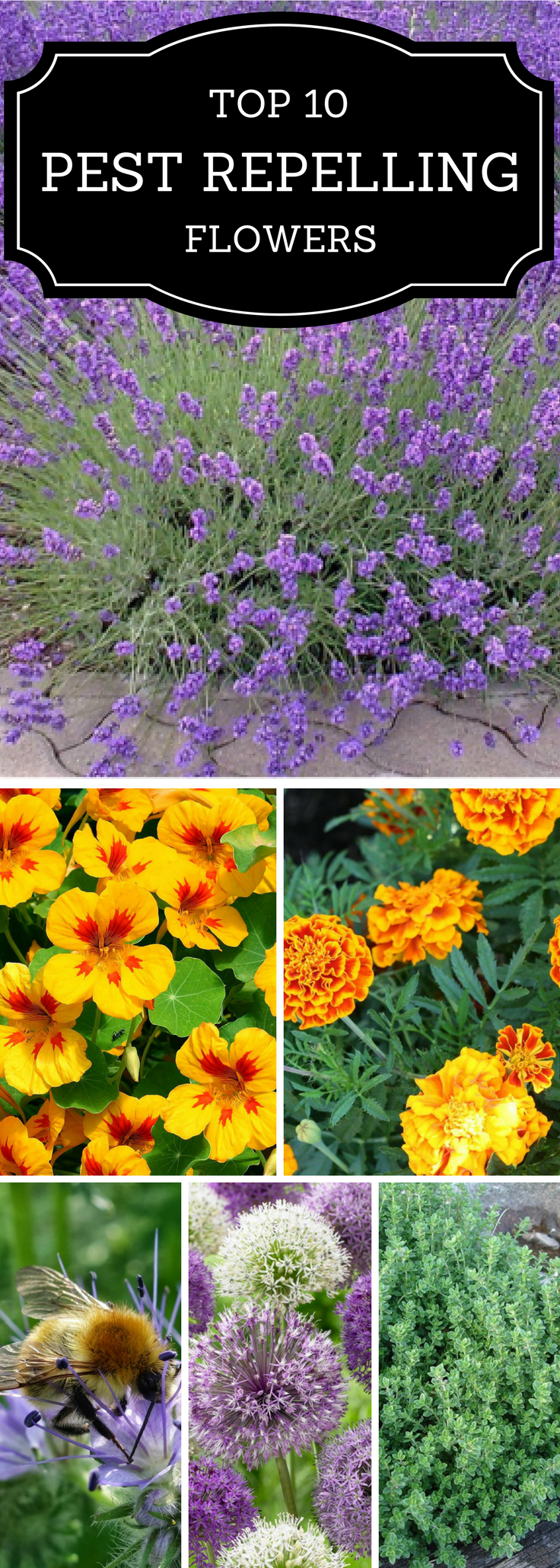 Top bug repelling flowers that keep pests out of your garden
