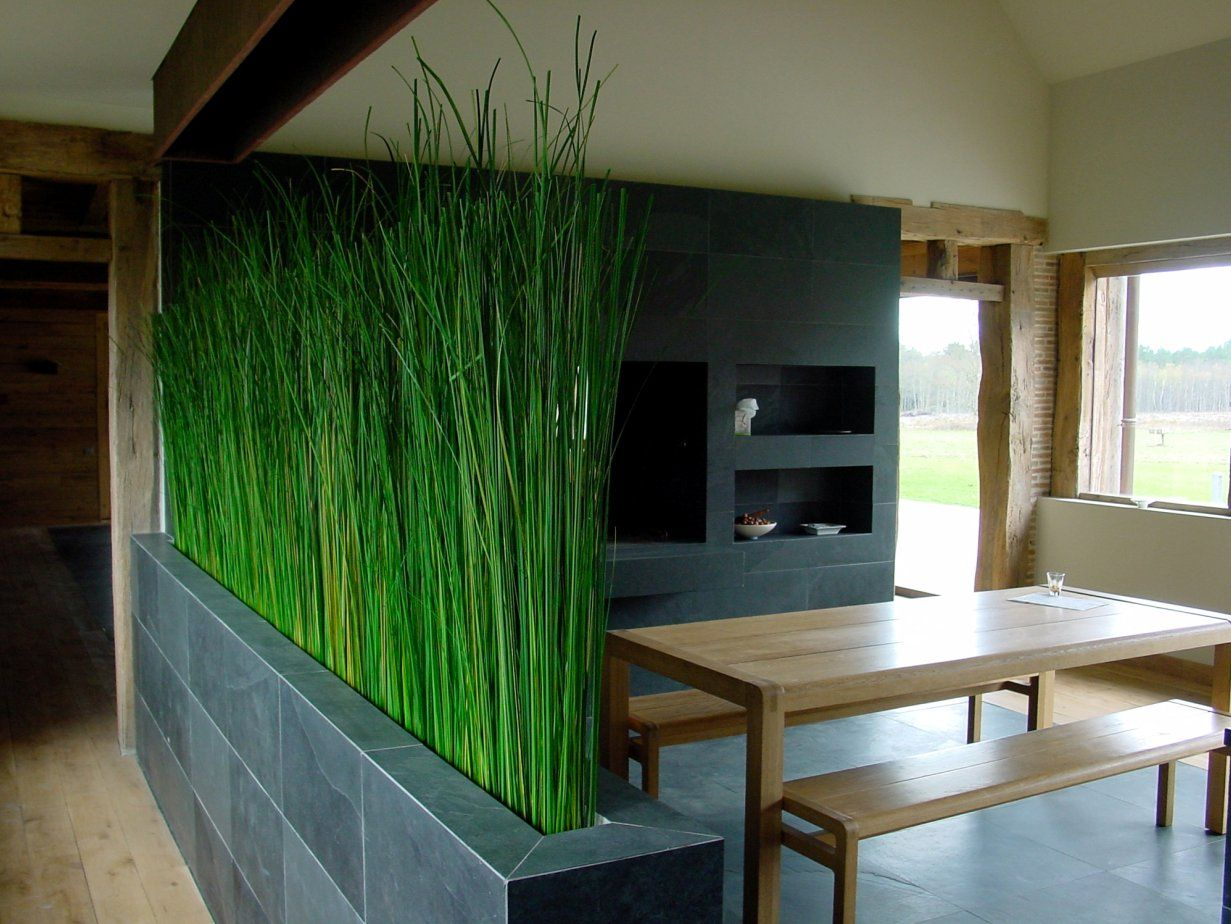 indoor but like the privacy screen aspect  extra height from the container  no exposed soil and