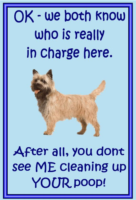 Gifts For Dog Owners Cairn Terrier Fridge Magnet Various