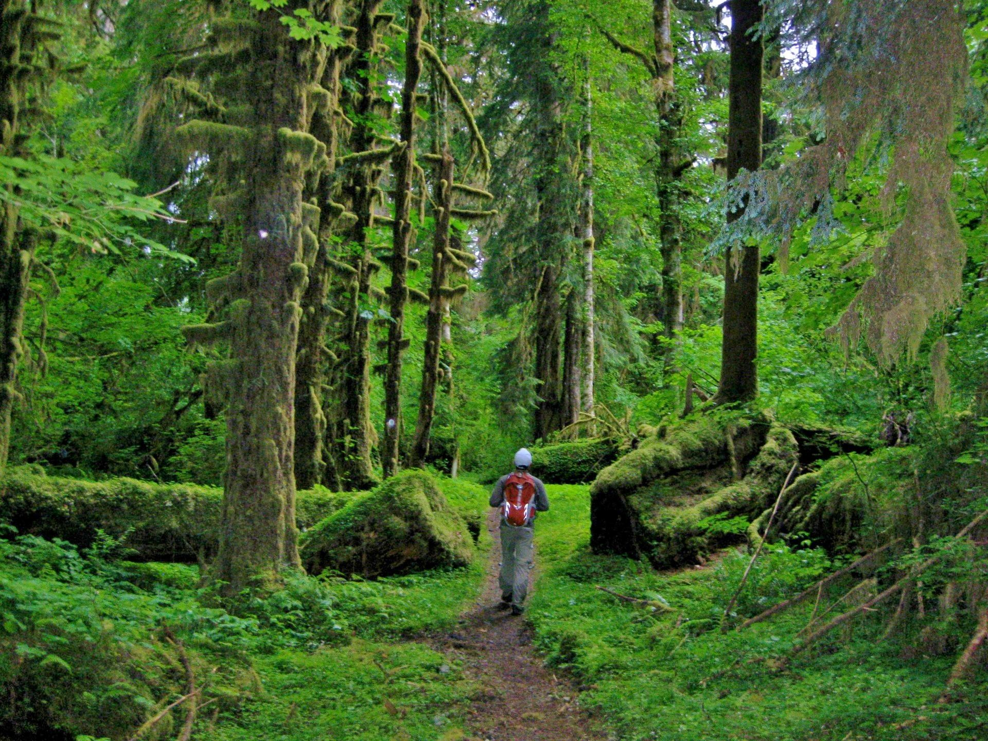 Best Images About Olympic Rain Forest On Pinterest Tide - Map washington state peninsula
