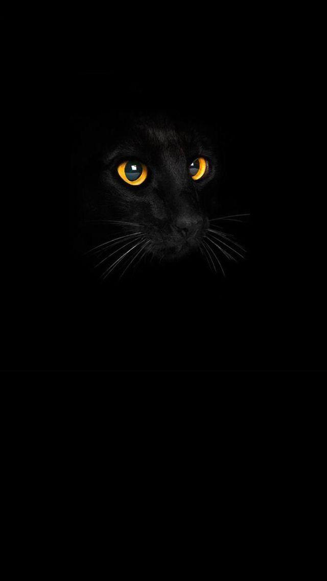 Black Cat Wallpaper For Android Seni Bunga Teratai Kucing