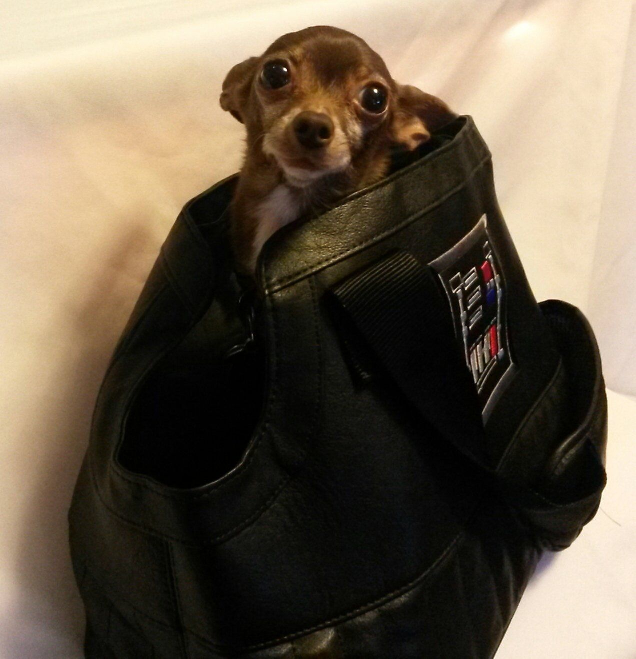 star wars darth vader pet carrier see this great product this rh pinterest com