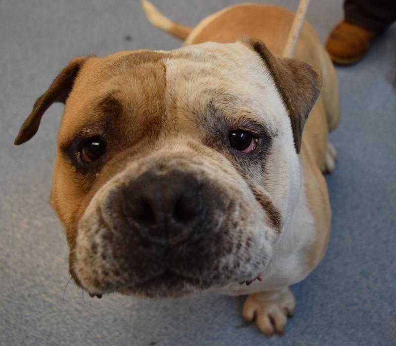 Adopt Slow Poke On I Love Dogs Animal Shelter Animals