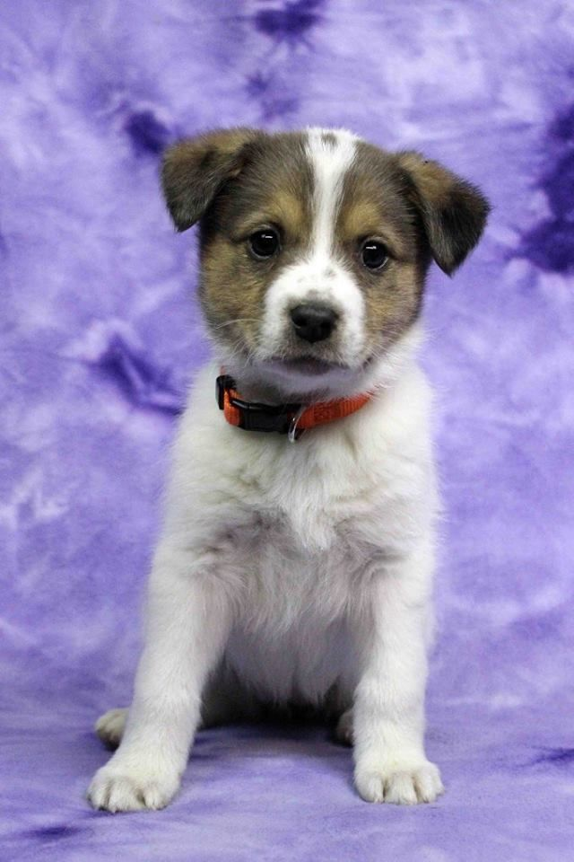 Furry Francine Who S Available For Adoption With Rocky Mountain Puppy Rescue Petco In Arvada Co On April 30 2016 Posted 4 30 16 Petco Puppies Furry