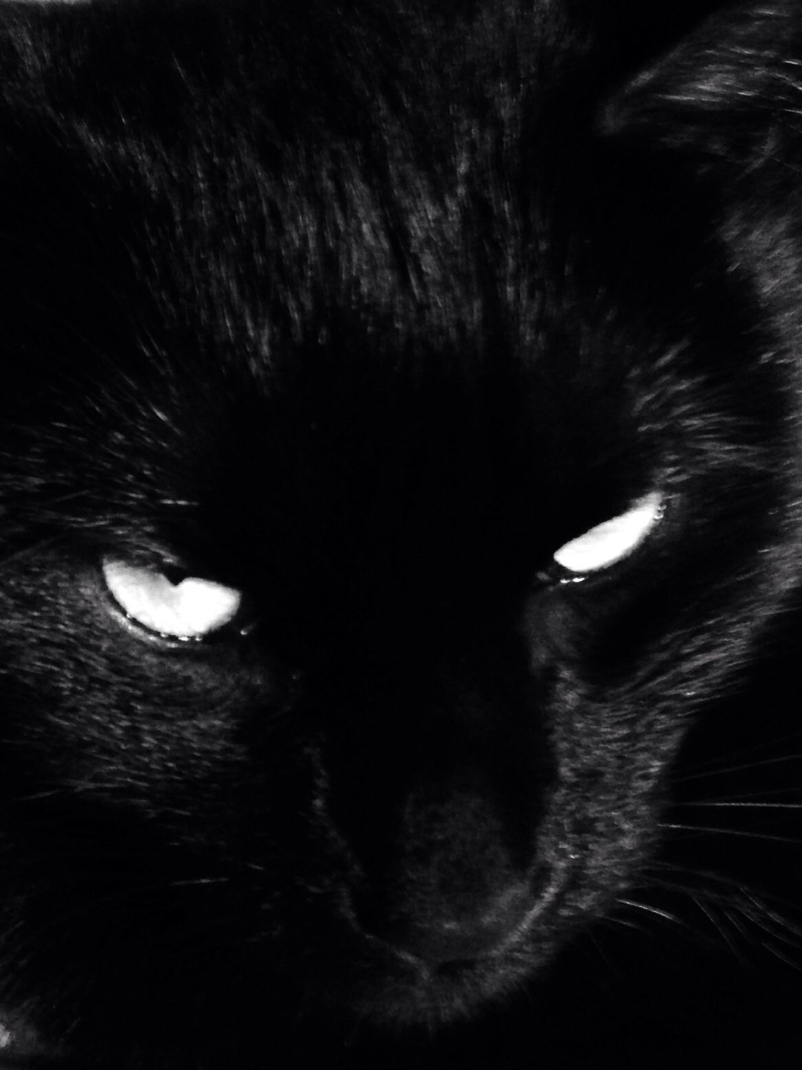 Bertie the Cat Noir