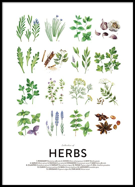 Culinary herbs, posters in the group Posters & Prints / Sizes ...