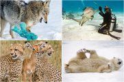 11 диких животных, показавших себя с необычной стороны