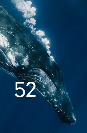 52: The Search for the Loneliest Whale in the World is a