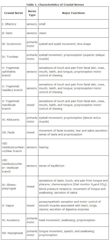 Cranial Nerves … | Pinteres…