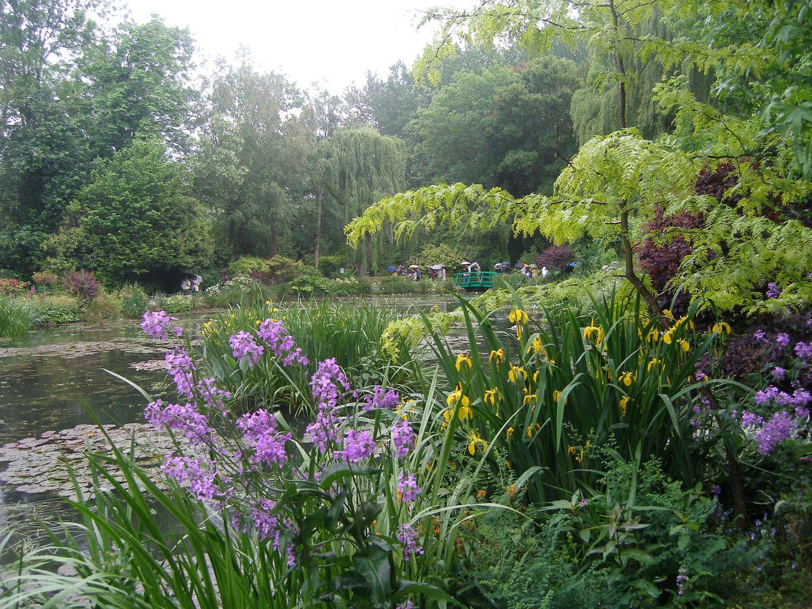 Garden garden plants