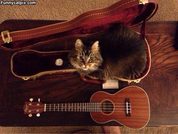 Cute kitty in ukulele case.