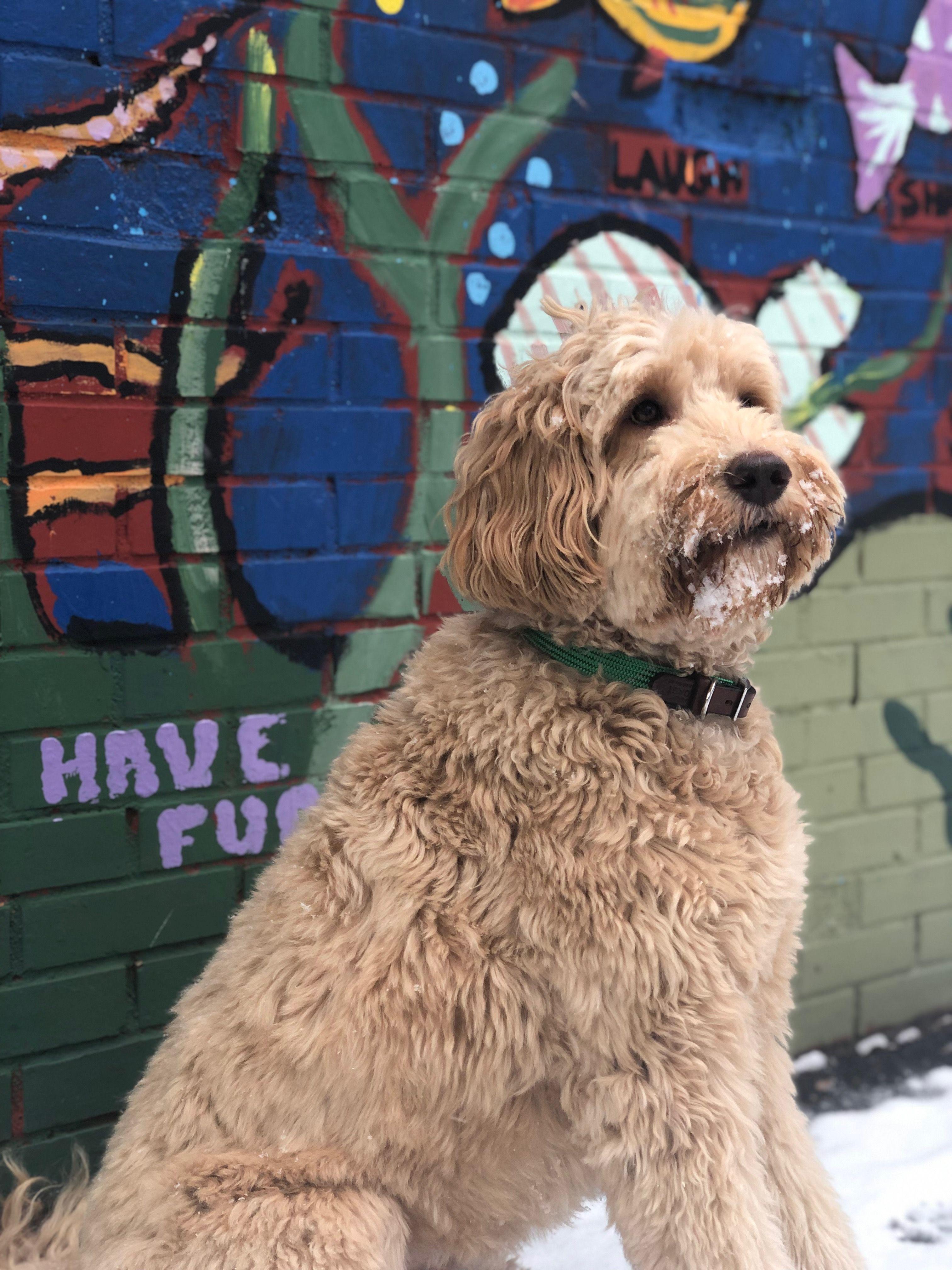 Green Gray Black Dog Collar Coast Brands Makes Stylish Dog
