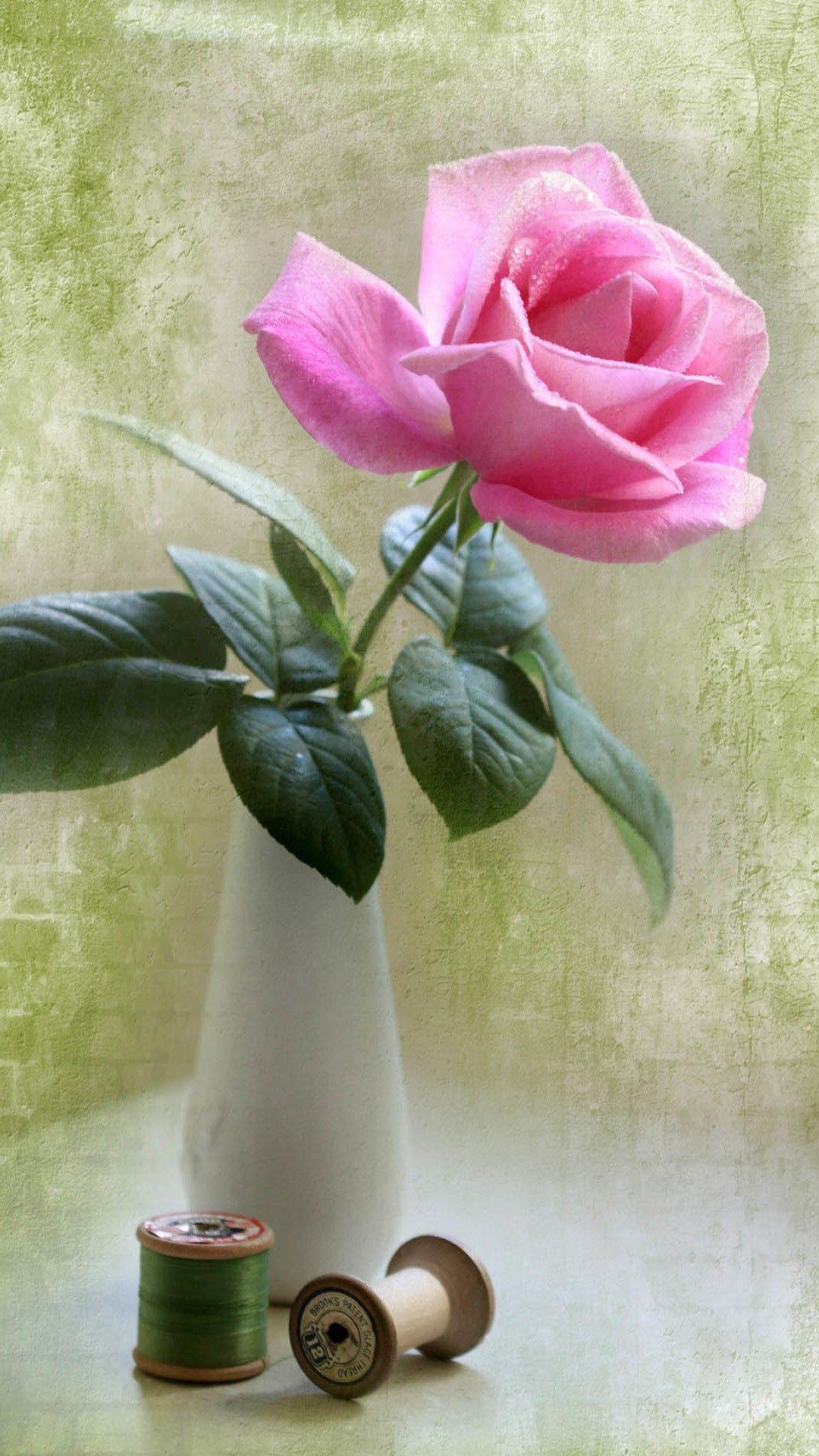 Elegant pink rose vase ikebana art iphone 6 plus - Pink rose wallpaper iphone ...