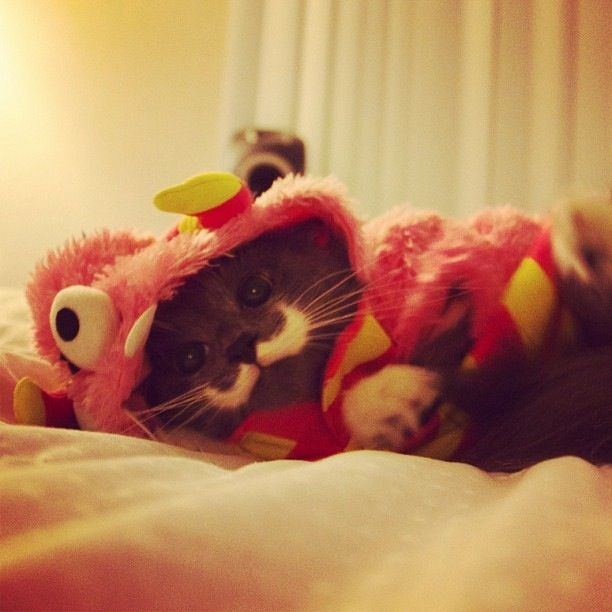 Cat in costume & Cat in costume | Cats in Costume | Pinterest