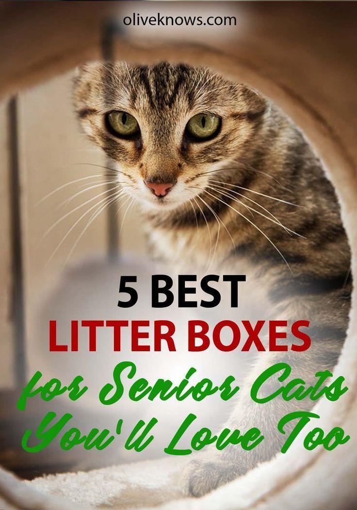 5 best litter boxes for senior cats 2019 guide best
