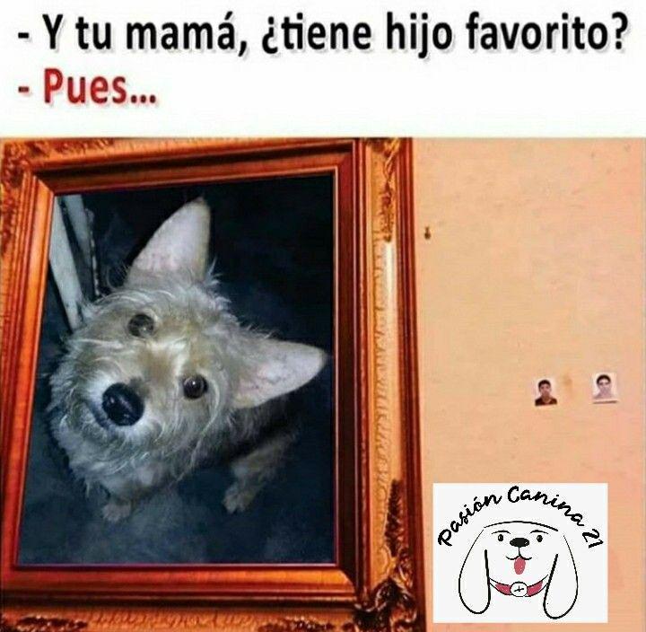 Pin De Claire Adams En Imagenes Chistosas Memes De Perros Chistosos Memes Perros Mascotas Memes