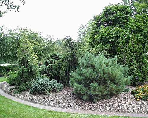 Conifer Garden Ideas choosing conifers hgtv Conifer Garden Kassabaum Dwarf Conifer Garden