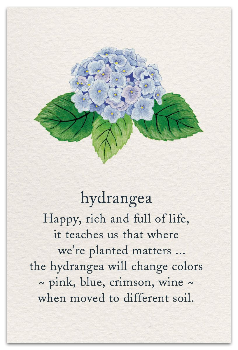 Hydrangea Flower Quotes Flower Meanings Flowers