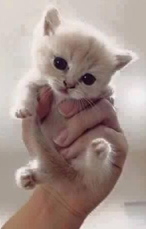 Pin By Nunik Utami On Miong Lucuuuuuuuuuuuu Kittens Cutest Baby