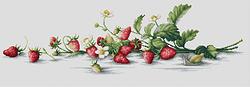 B2266 Etude con fresas €18.50  Kit completo de punto de cruz Marca: Luca-S Hilos: Anchor Tela Aida: Zweigart Medidas: 50*14,5cm Colores: 34