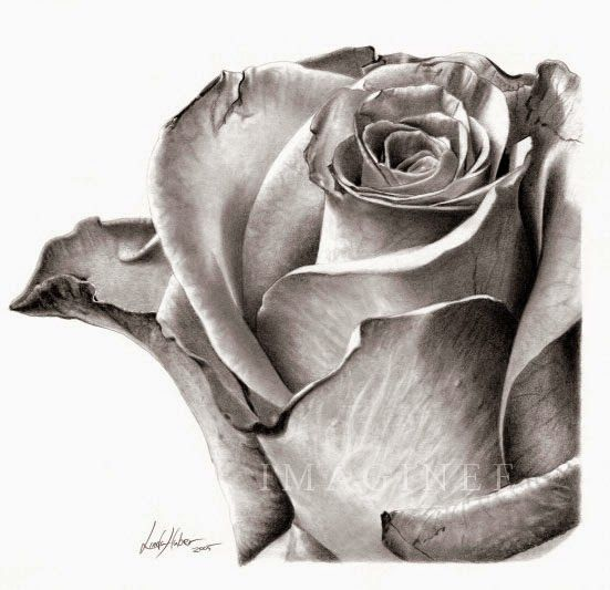Rose Drawing | Pencil drawings of flowers, Roses drawing, Beautiful flower drawings