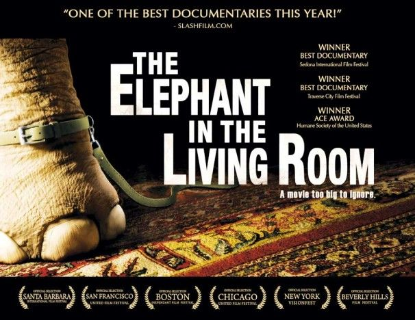The Elephant In The Living Room Best Documentaries Elephant