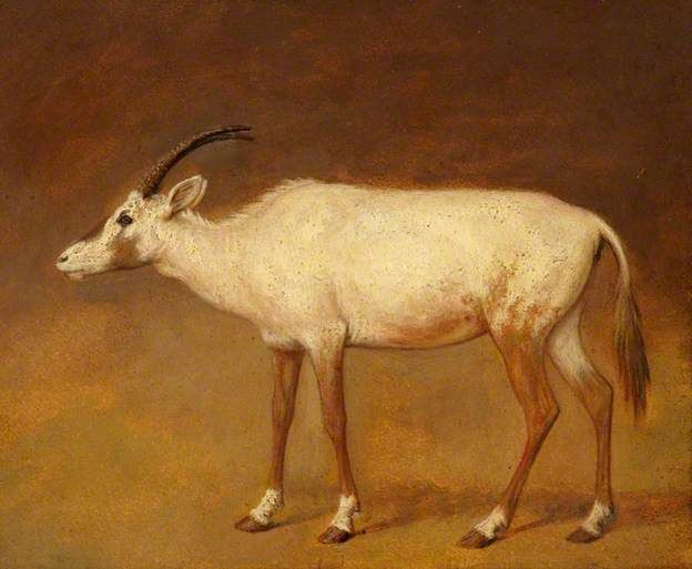 White Antelope by Jacques Laurent Agasse (1767–1849)