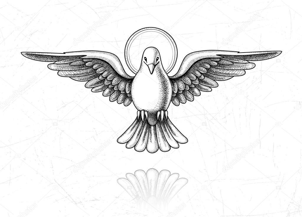 Resultado de imagen para imagenes de la paloma del espiritu santo ...