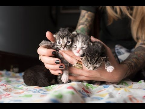We Learned So Much About Caring For Our Orphaned Kittens From Kitten Lady S Videos Watch And Learn If You Are Cari Cute Kitten Gif Newborn Kittens Kitten Care