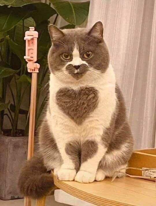Photo of Qué hermosos #cats – gatos
