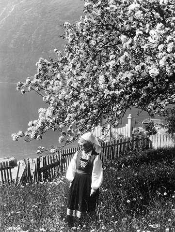 Galleri NOR; Ullensvang fru Brita Utne frugtre 1933