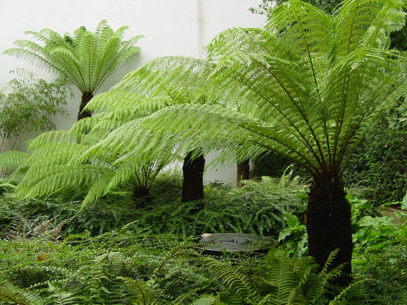 Fern Garden Ideas Modern fern garden google search fern garden pinterest ferns modern fern garden google search workwithnaturefo